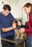 Cane d'esame maschio del medico veterinario nella chirurgia fotografia stock