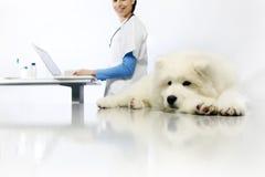 Cane d'esame sorridente del veterinario sulla tavola con il computer immagini stock libere da diritti