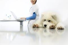 Cane d'esame sorridente del veterinario sulla tavola con il computer in veterinario immagine stock