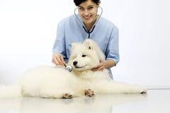 Cane d'esame sorridente del veterinario sulla tavola nella clinica del veterinario immagini stock libere da diritti