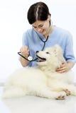 Cane d'esame sorridente del veterinario sulla tavola nella clinica del veterinario fotografia stock