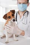 Cane d'esame veterinario immagine stock