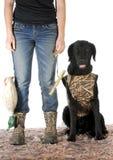 Cane da caccia Fotografia Stock Libera da Diritti