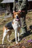 Cane da caccia con il proprietario fotografie stock libere da diritti