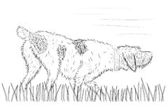 Cane da caccia di vettore sull'erba illustrazione vettoriale