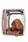 Cane che risiede nella cassa Fotografia Stock Libera da Diritti