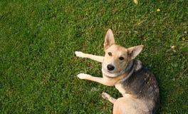 Cane da guardia Fotografia Stock