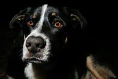 Cane da guardia della famiglia Immagine Stock
