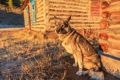 Cane da guardia sull'azienda agricola Fotografie Stock