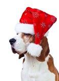 Cane da lepre in cappello di Santa isolato su bianco Fotografie Stock Libere da Diritti