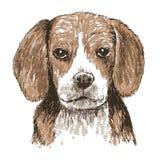 Cane da lepre disegnato a mano Immagini Stock Libere da Diritti