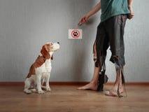 Cane da lepre ed il suo proprietario in pantaloni lacerati e nei piedi pungenti Immagine Stock
