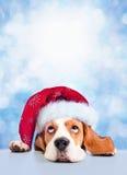 Cane da lepre sveglio in cappello rosso di Santa sul fondo blu di inverno Fotografia Stock Libera da Diritti