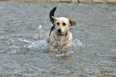 Cane da rinfrescare in acqua durante l'estate calda immagini stock