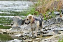 Cane da rinfrescare in acqua durante l'estate calda fotografia stock