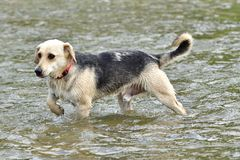 Cane da rinfrescare in acqua durante l'estate calda fotografia stock libera da diritti