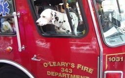 Cane dalmata in camion dei vigili del fuoco fotografia stock libera da diritti