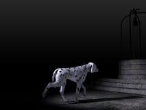 Cane Dalmatian nella notte Immagine Stock