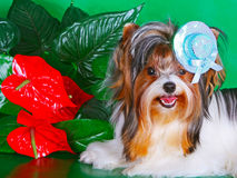 Cane decorativo in un cappello su un fondo verde Immagine Stock Libera da Diritti