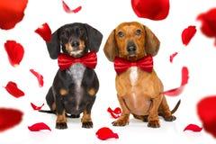 Cane dei biglietti di S. Valentino immagine stock libera da diritti