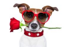 Cane dei biglietti di S. Valentino Fotografie Stock