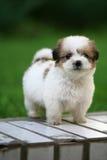 Cane del bambino Immagini Stock