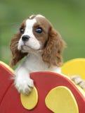 cane del bambino Fotografia Stock Libera da Diritti