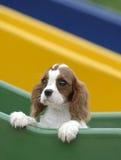 cane del bambino Fotografie Stock Libere da Diritti