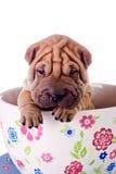 Cane del bambino di Shar Pei in una grande tazza Fotografia Stock Libera da Diritti