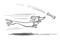 Cane del bassotto tedesco che è in corsa per osso Fotografia Stock Libera da Diritti