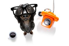 Cane del bassotto tedesco della salsiccia dell'uomo d'affari dell'impiegato di concetto fotografia stock