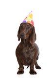 Cane del bassotto tedesco di Brown in un cappello di compleanno Immagini Stock