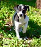 Cane del Bodega, Spagna immagini stock libere da diritti