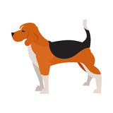 Cane del cane da lepre isolato Immagini Stock