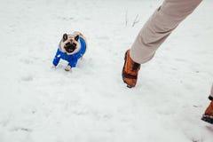 Cane del carlino in cappotto di inverno che gioca con il suo padrone Funzionamento del cucciolo sulla neve immagini stock