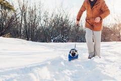 Cane del carlino che cammina sulla neve con il suo padrone Cappotto d'uso di inverno del cucciolo fotografia stock libera da diritti
