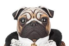 Cane del carlino del giocattolo in costume del maggiordomo fotografia stock libera da diritti