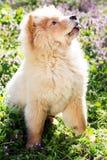 Cane del cibo di ?how nell'erba Immagine Stock Libera da Diritti