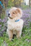 Cane del cibo di ?how nell'erba Fotografia Stock Libera da Diritti