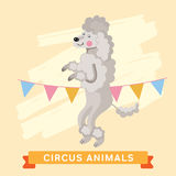 Cane del circo, serie dell'animale di vettore illustrazione di stock