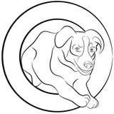 Cane del Collie di bordo che salta attraverso il cerchio Fotografia Stock Libera da Diritti
