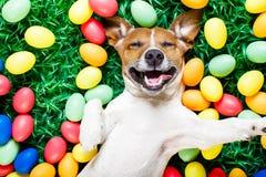 Cane del coniglietto di pasqua con il selfie delle uova Fotografia Stock