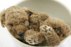 Cane del cucciolo Immagini Stock Libere da Diritti