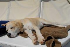 Cane del cucciolo che dorme sulla barca Fotografia Stock