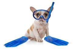Cane del cucciolo con l'attrezzo navigante usando una presa d'aria di nuoto Fotografie Stock Libere da Diritti