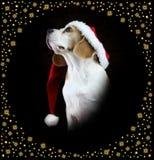 Cane del cane da lepre di Natale che porta un cappello di Santa fotografie stock