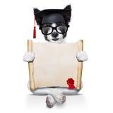 Cane del diploma Fotografia Stock