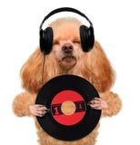 Cane del disco di vinile della cuffia di musica Fotografia Stock