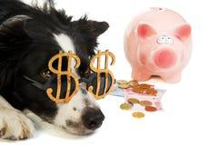 Cane del dollaro con la banca piggy Fotografie Stock Libere da Diritti