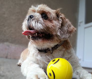 Cane del giocatore Fotografia Stock Libera da Diritti